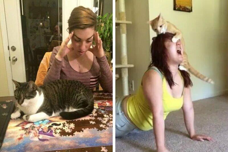 15 доказательств того, что без котов наша жизнь былабы невероятно скучной