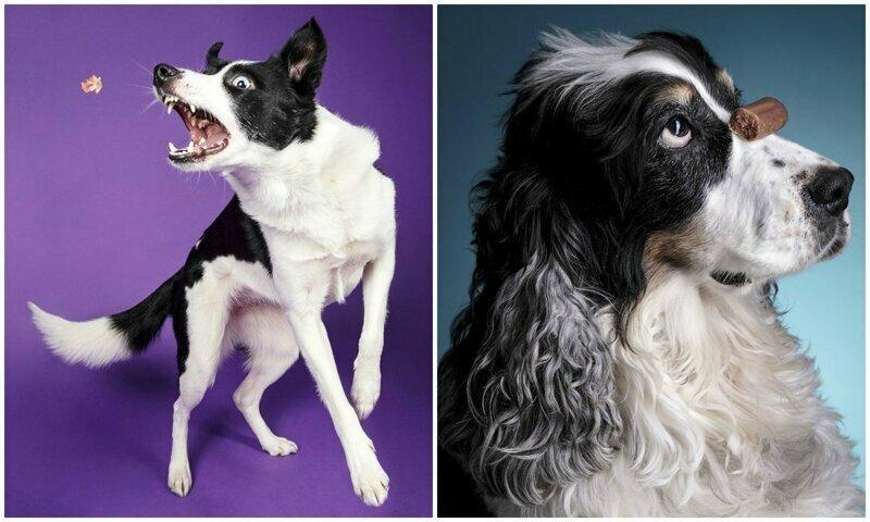 """""""О, еда!"""": фотограф снимает забавные реакции собак на угощения"""