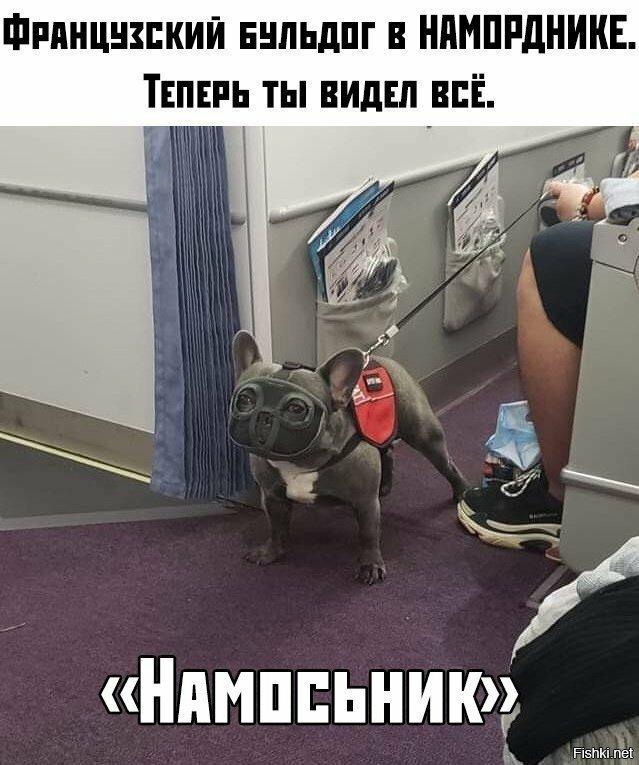 Солянка от Иван Кемеров за 11 октября 2019