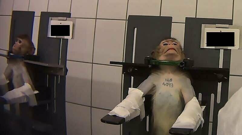 В Сети всплыли кадры с привязанными обезьянами, снятыми в немецкой лаборатории