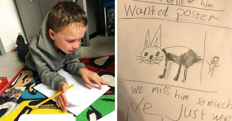 Мальчик хотел найти похищенного пса и рисовал плакаты как мог