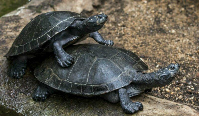 «Черепахи очень громко спариваются. Очень» и другие откровения работницы зоопарка о животных