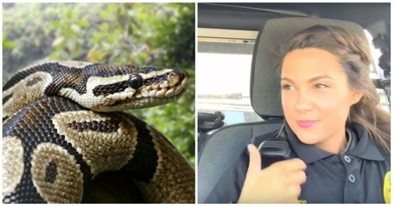Когда очень не хочется выезжать на вызов и ловить крупную змею