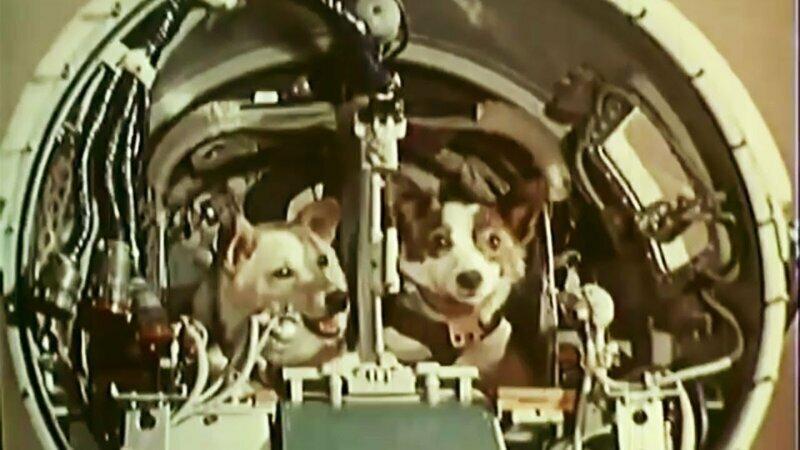 Как ели животные в космосе