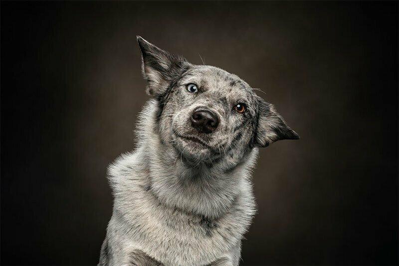 Портреты животных, на которых они выглядят очень по-человечески