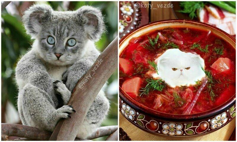 Коты везде: самая мозговыносящая кошачья подборка