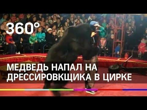 На глазах у детей медведь напал на дрессировщика в Карелии