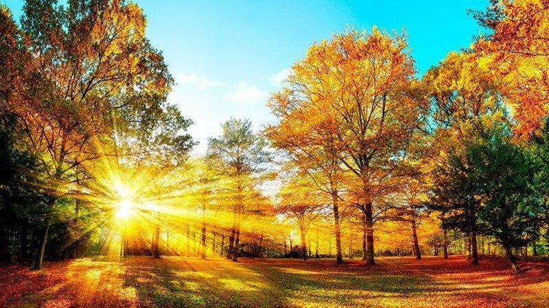 Осень золотая в гости к нам пришла
