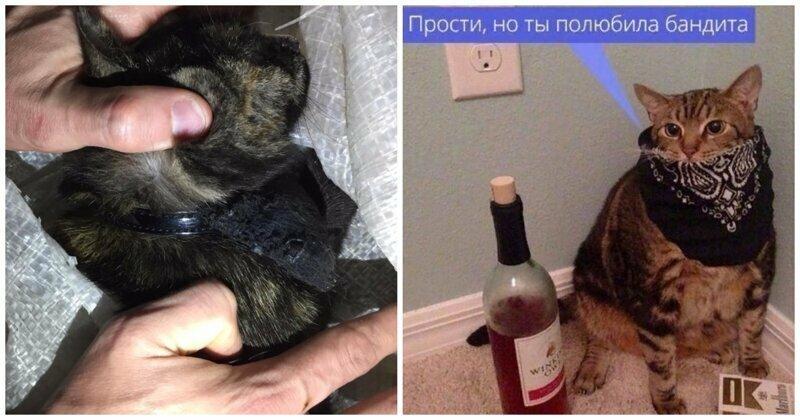 В Татарстане «задержали» кота-наркокурьера