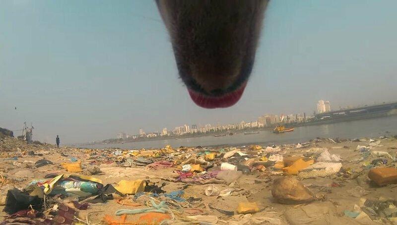 Жизнь уличной собаки в Индии и то, с чем этим животным ежедневно приходится сталкиваться