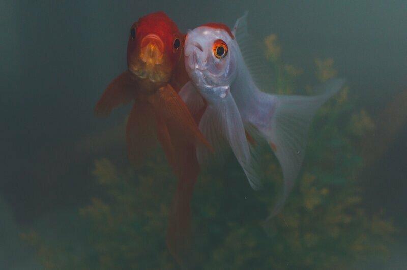 В аквариуме стоит фильтр, но вода все равно мутнеет. Почему?