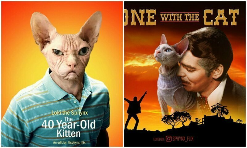 Актеров на постерах к фильмам заменили на котиков