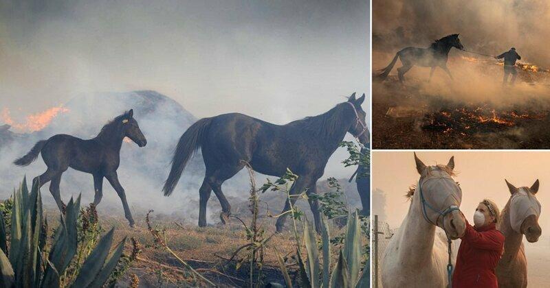 Лошадь бросилась в горящую конюшню, чтобы спасти жеребенка