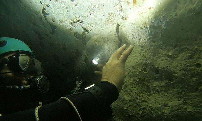 Мексиканские дайверы нашли самое крупное доисторическое животное