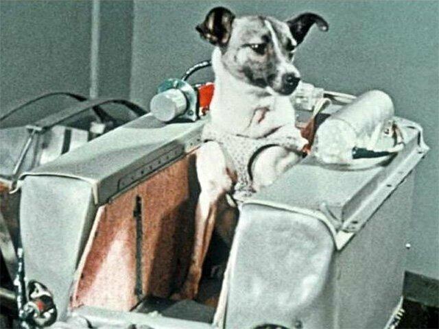 3 ноября 1957, Второй в мире спутник был запущен в СССР с живым существом на борту - собакой Лайкой
