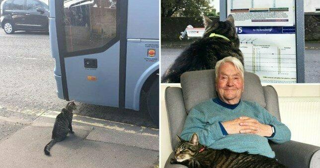 Кот Джордж стал звездой благодаря его приключениям и одиночным поездкам в автобусах и поездах