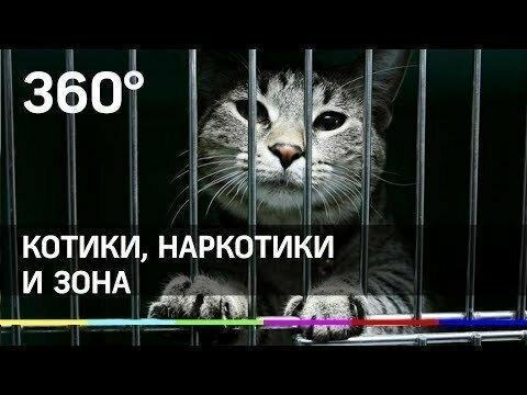 Котики, наркотики и зона: кота-наркокурьера спасли в Татарстане