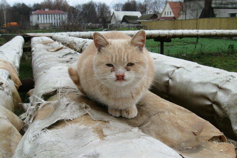 Очень милые и колоритные котики