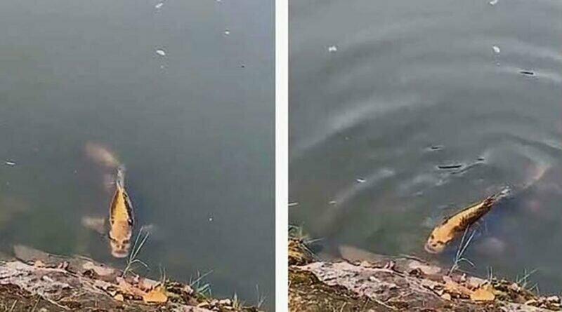 В Китае обнаружена рыба с «человеческим лицом»