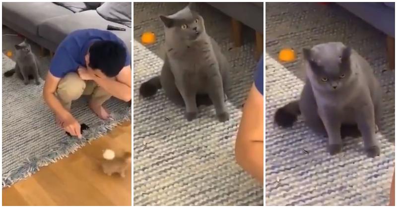 «Не трогай его!»: смешная реакция ревнивой кошки