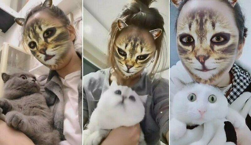 Веселая реакция питомцев на «кошачий фильтр»