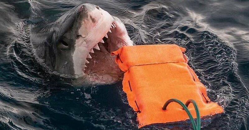В Австралии разработали защиту от акул