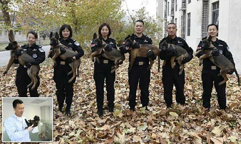 Китайская полиция клонирует для службы супер-собак