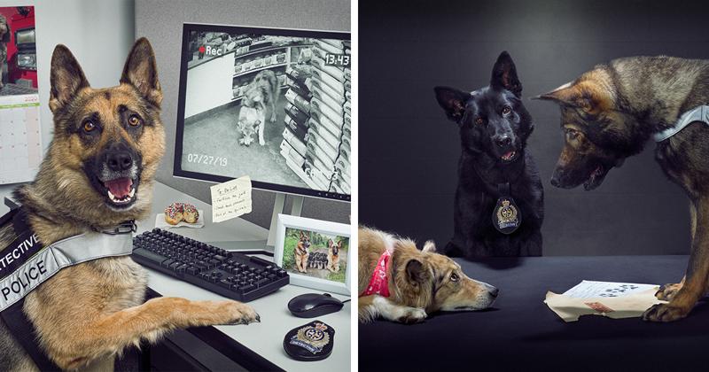 Полицейские сделали себе календарь - каждый собачник захочет такой же!