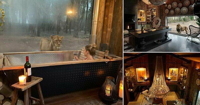 Отдых с видом на львов: первый в мире отель посреди заповедника
