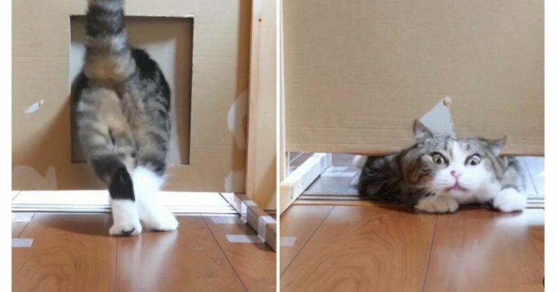 100 процентов умиления: прикольные эксперименты с участием уморительных котиков