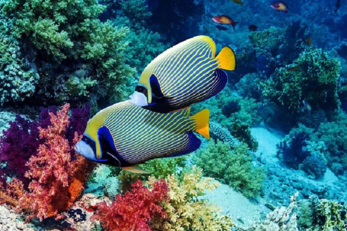 10 интересных фактов о рыбах