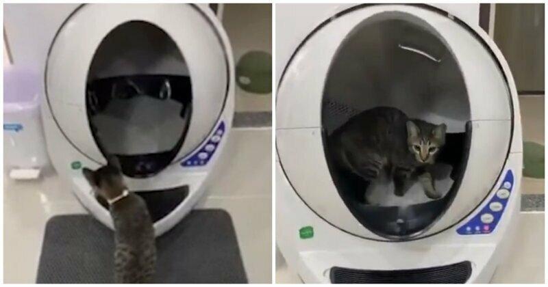 Высокотехнологичный кошачий туалет