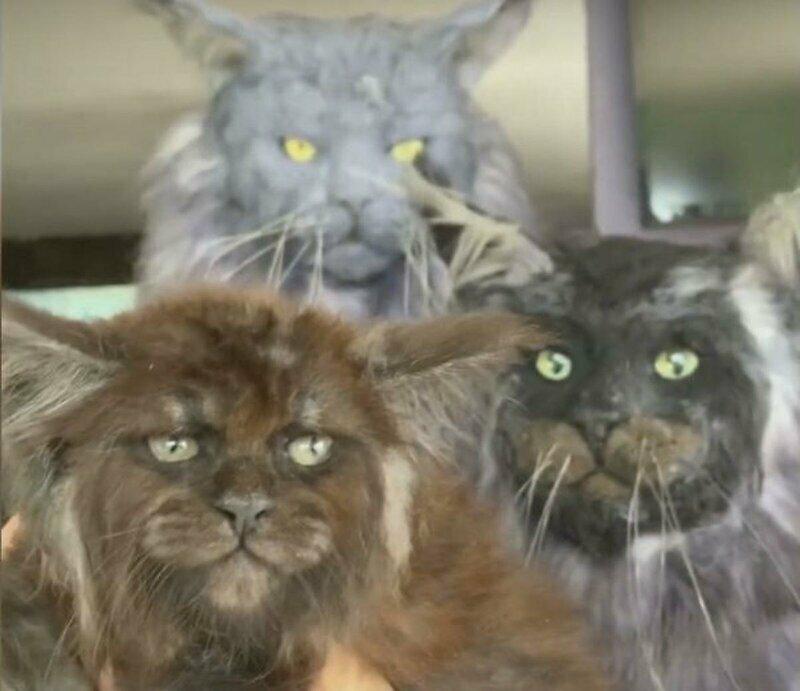 Причудливые котята, с человеческими глазами и торчащей в разные стороны шерстью