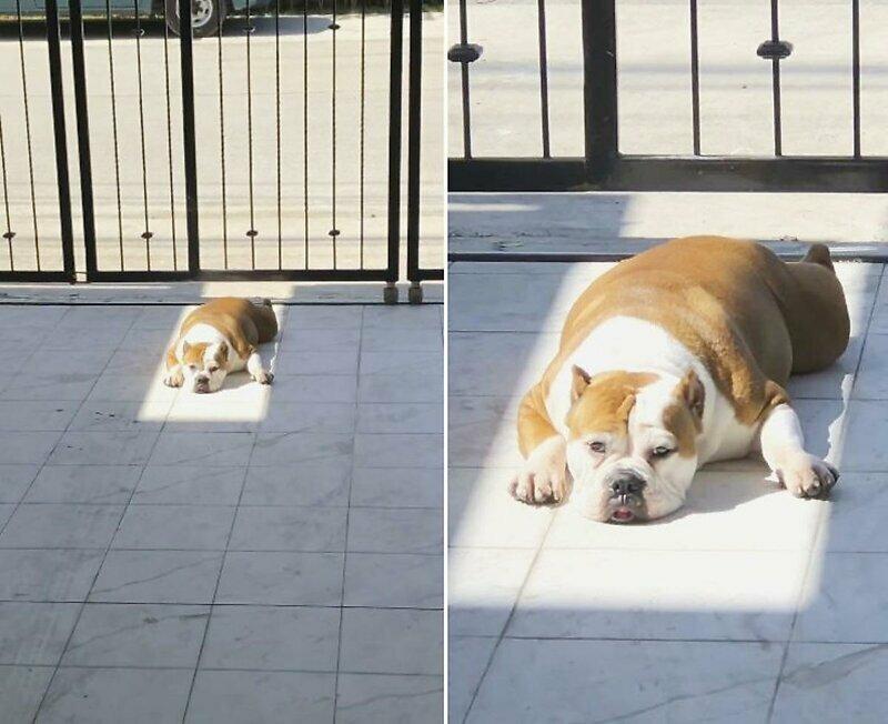 Скучающий по солнцу пёс всё-таки нашёл место для принятия солнечных ванн