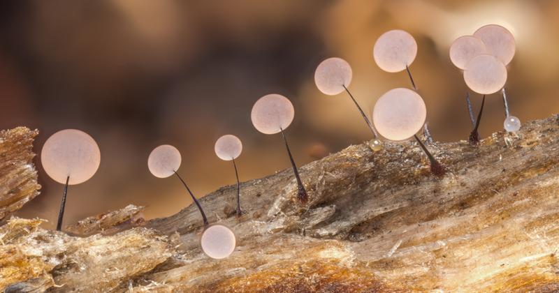 Завораживающие макроснимки, посвященные красоте крошечных грибов