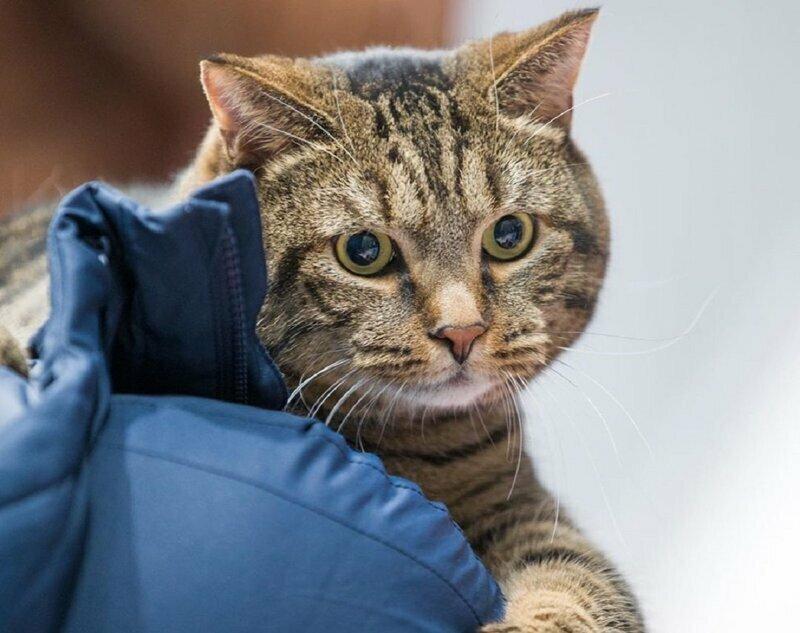История про кота Виктора продолжается!