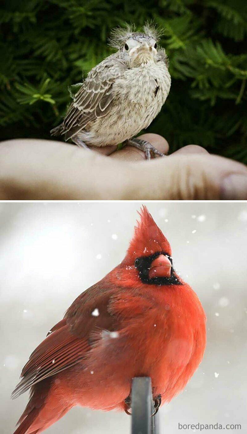 Гадкий утенок: как выглядят детеныши разных птиц
