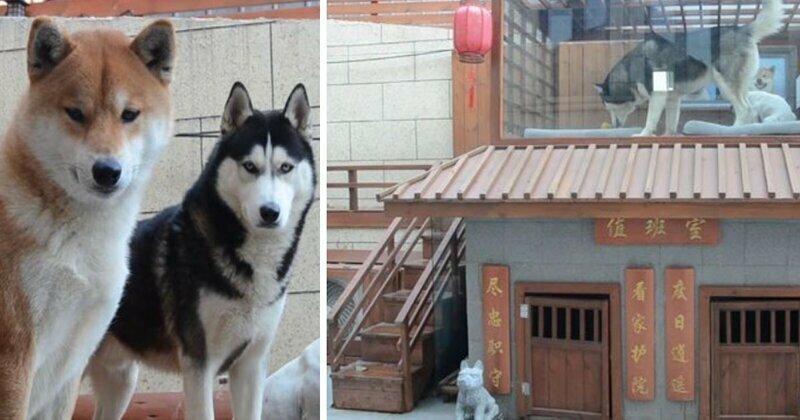 Китаец построил своим собачкам роскошный особняк с гостиной и сауной