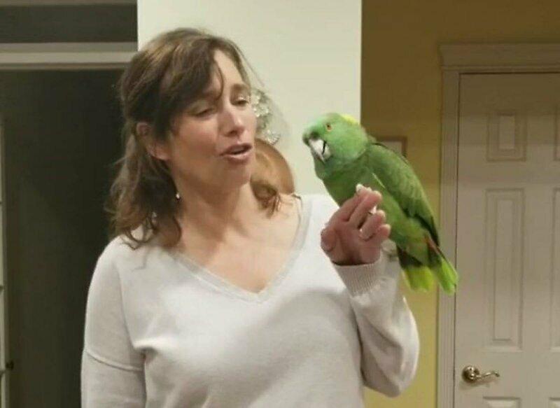 Озорной попугай прекрасно имитирует звуки