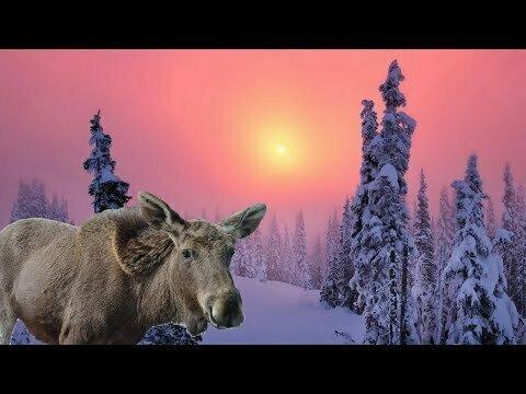 24 часа один зимой в Горной Шории
