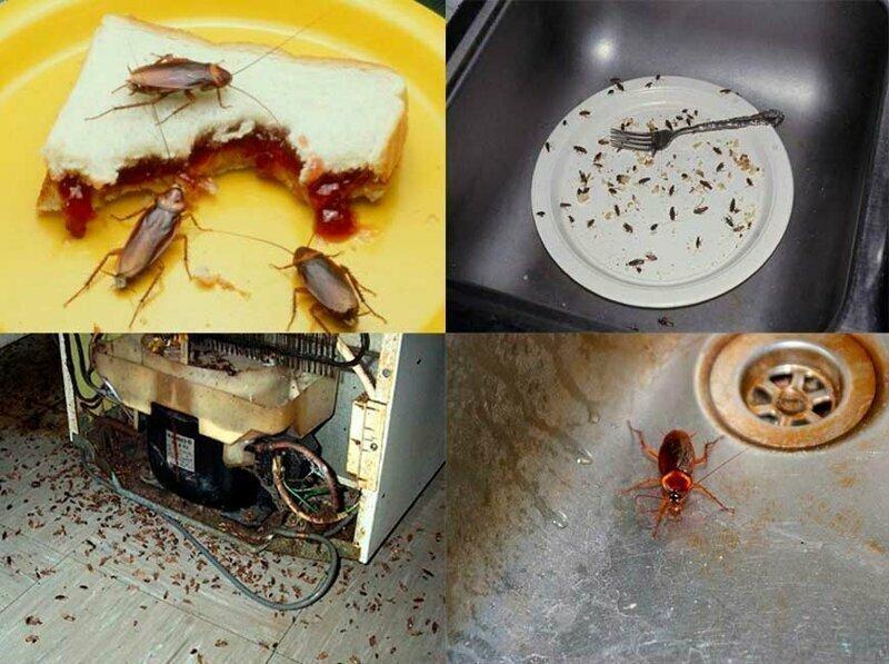 Куда и почему пропали тараканы