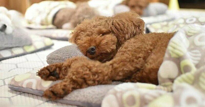 Фотографии спящих щенков из специального детского сада для собак