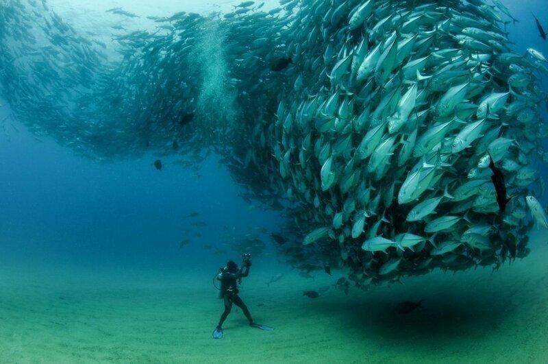 Как киты могут незаметно подкрадываться к косякам рыбы