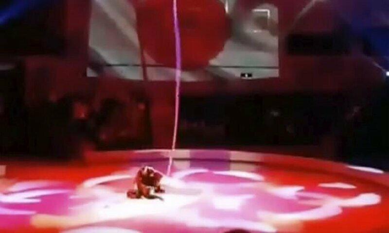 Гимнастка упала с каната во время циркового представления