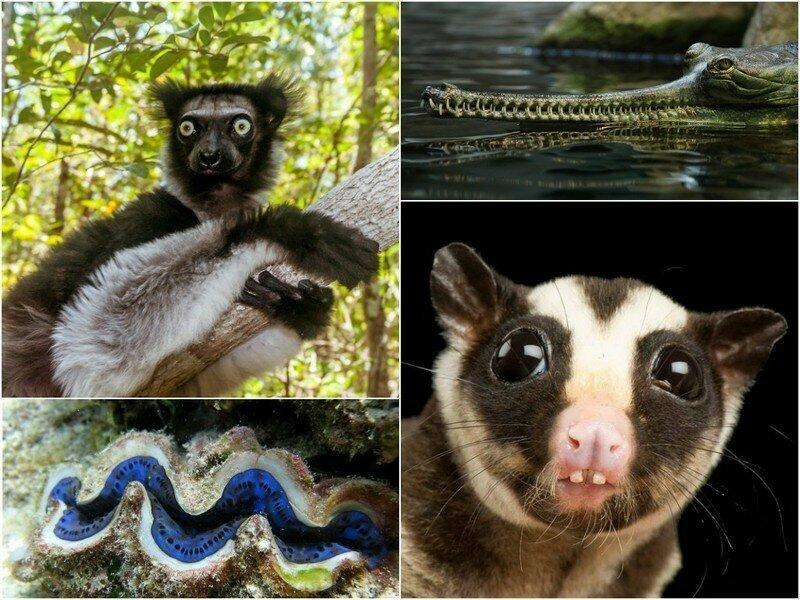 Животные, которых природа будто бы спроектировала в спешке
