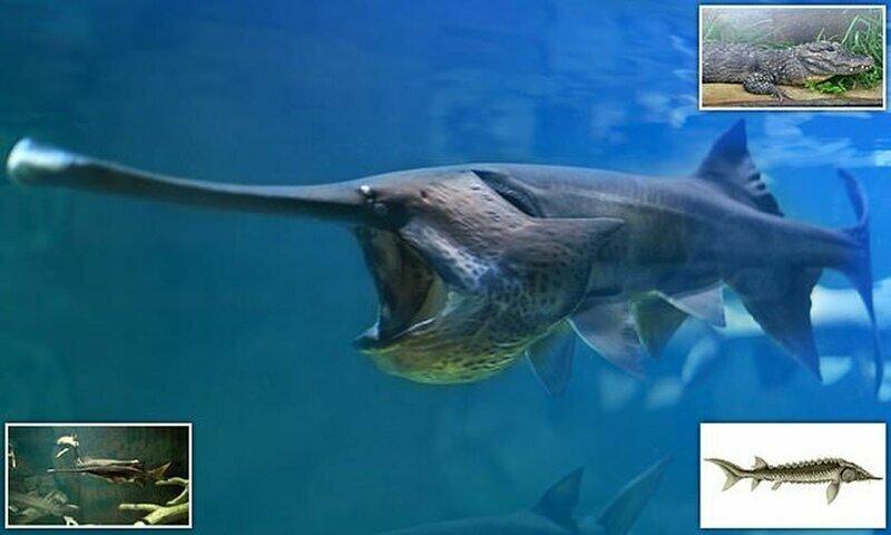 Гигантская рыба из реки Янцзы исчезла с лица Земли