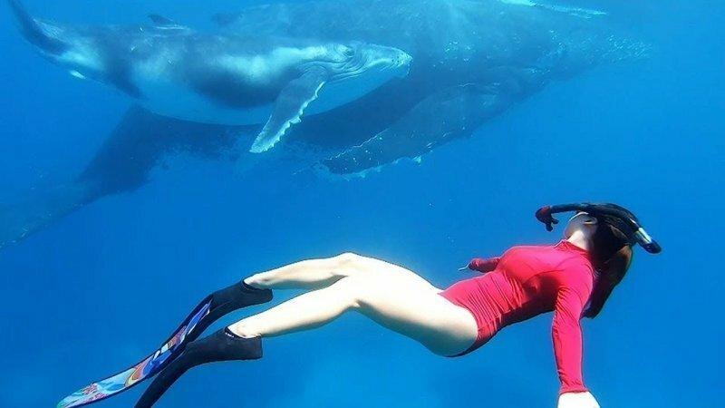 Потрясающие кадры! Девушка поплавала с огромными горбатыми китами у побережья Тонги