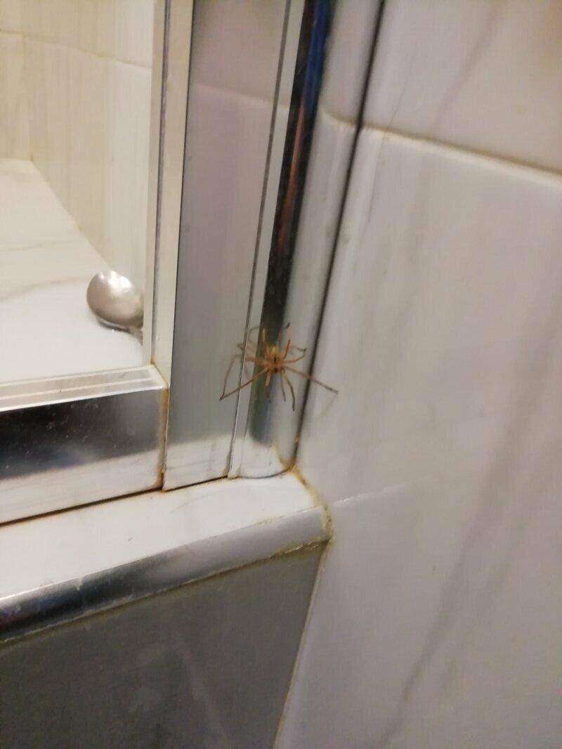 Помогите опознать паука!
