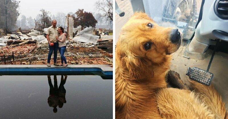 Счастливый пёс нашел любимую игрушку под руинами дома