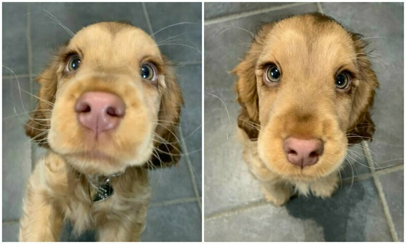 Винни - собачка, которая выглядит, как мультяшный персонаж